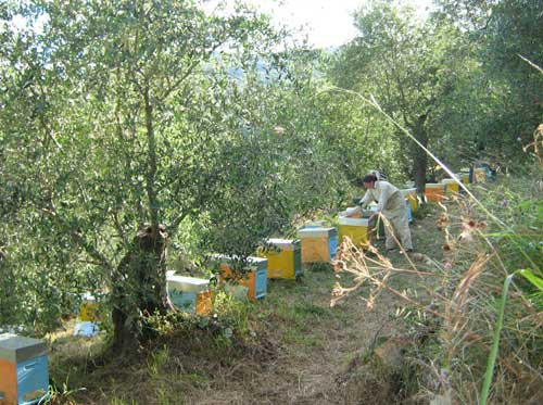 Abbo Silvia apicoltura 1