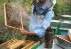 emanuela borzoni per lapis 1