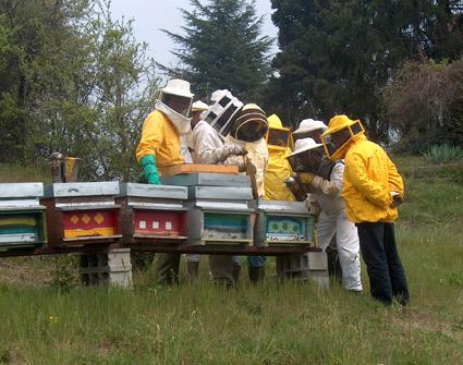 corso-in-apiario