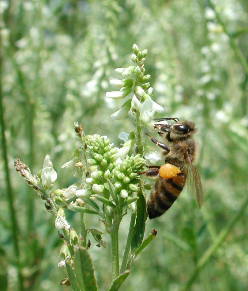 polline-online